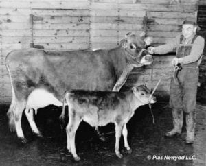 Lea-Zana-and-bull-calf